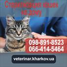 sterilizatsiya-koshki-kharkov-id592242.html Image1151670