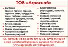 UB image 1221436
