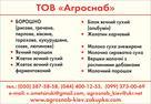 UB image 557751