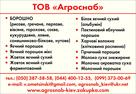 UB image 808130