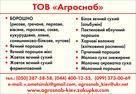 UB image 927518